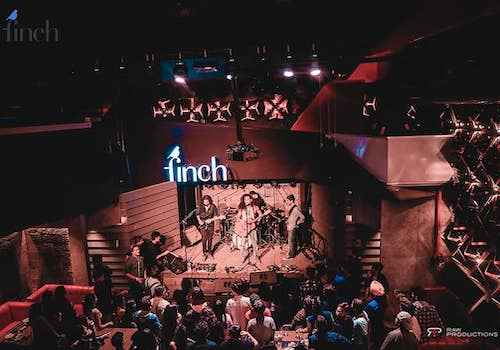 celebrate the festive season with the finch