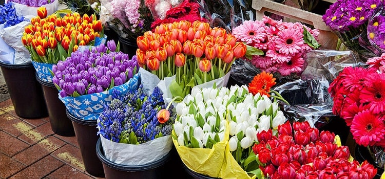Amazingly Affordable Florists In Chandigarh!