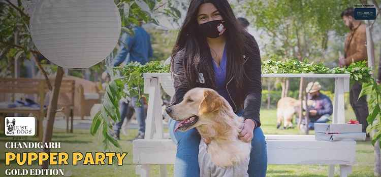 Chandigarh Pupper Party At Piccadilia