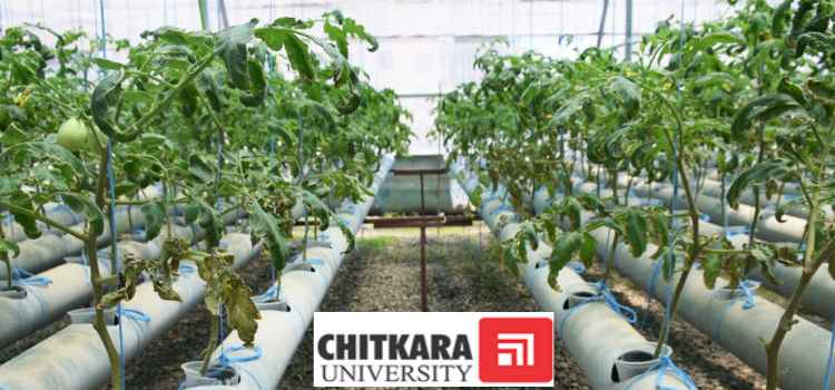 Hydroponics Greenhouse Farming: Chitkara University's Environmental Startup!