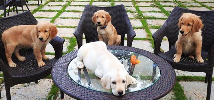 Pet-Friendly Cafes In Bangalore For All Those Who Love Taking Their Furry Companions On Date